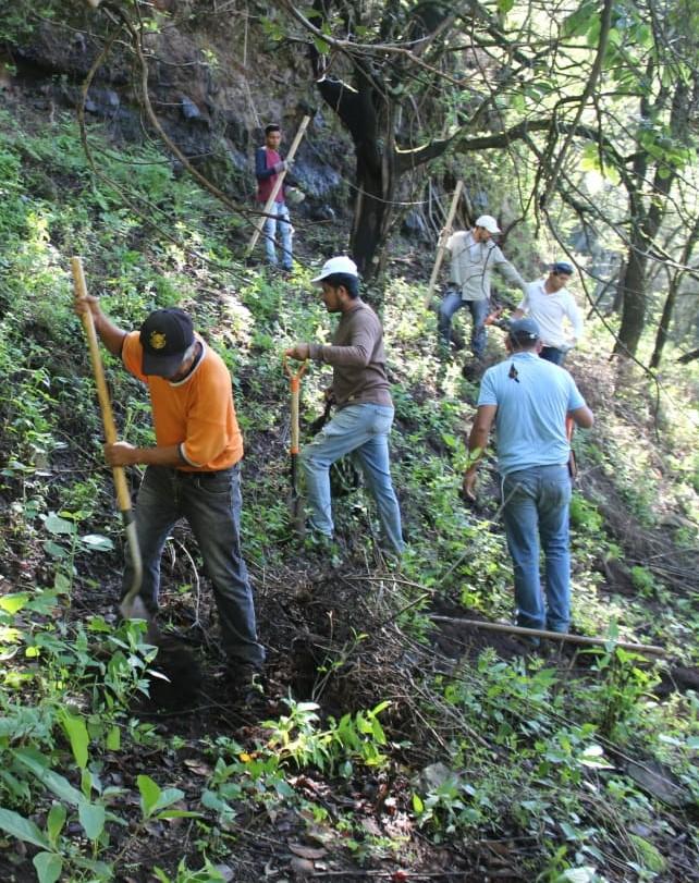 Preparación suelo reforestación3